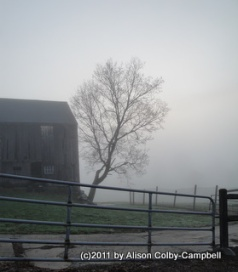 Fog on Barker Farm