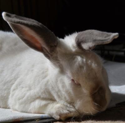 Mystic in repose