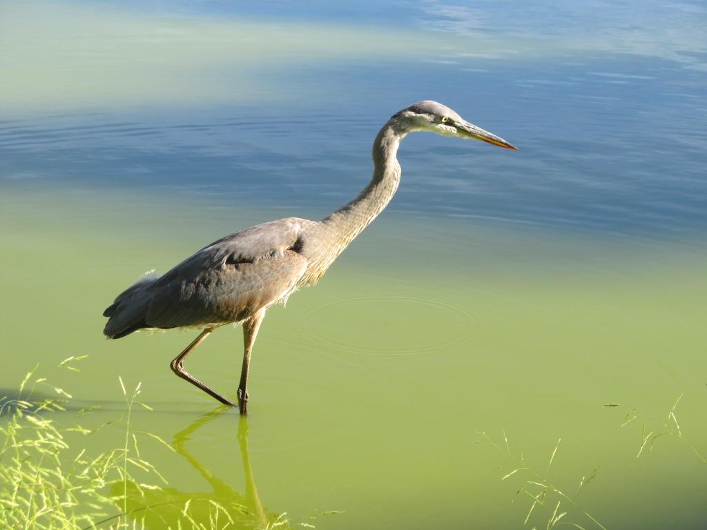 IMG_6985 Field of honor heron