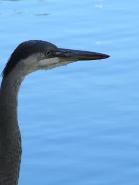 IMG_7012 Field of honor heron