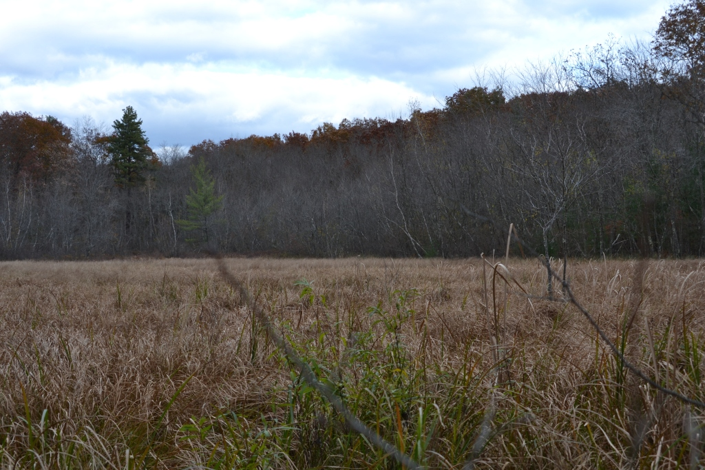 Why wouldn't someone want to cross a 6 acre bog?