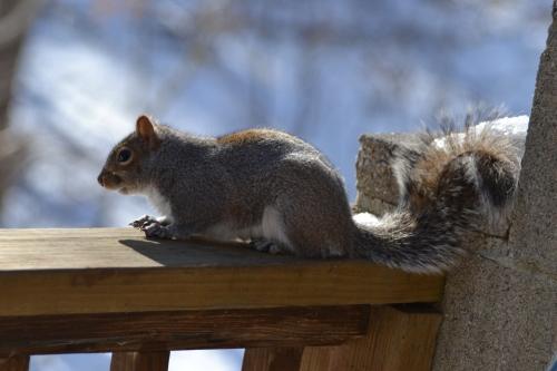 Voyeuristic Squirrel