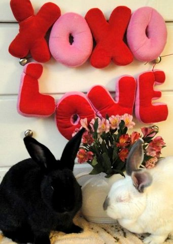 Love me; love my bunnies Bullwinkle and Mystic Baby