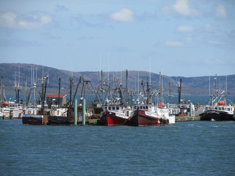 Scallop fleet in Digby