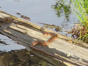 img_5318 snake