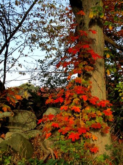 IMG_5588 leaves rock tree