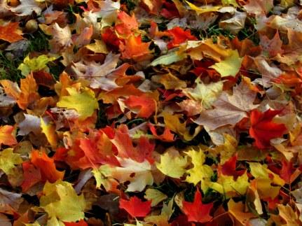 IMG_5606 foliage blog