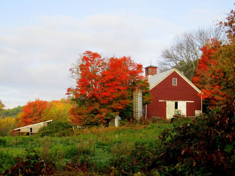 IMG_5617 farm