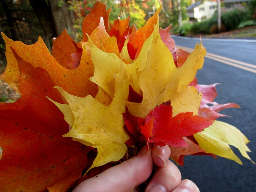 """My maple bouquet """"leafie"""" not a selfie of my thumb and forefinger"""