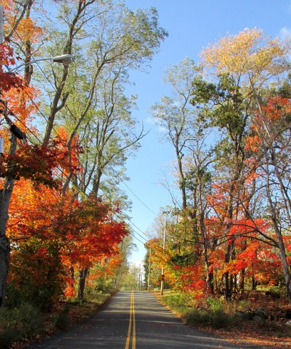 IMG_5774 foliage road behind the house