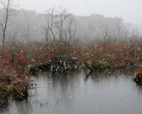 First snow, Middleton MA Dec 1, 2014