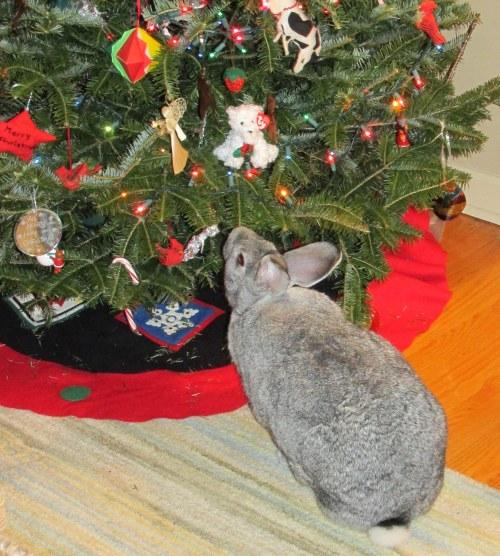 IMG_2666 Christmas tree 2013 Bongo