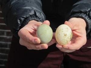 IMG_8793 Duck eggs