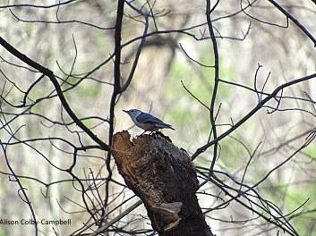 IMG_2321 Topsfield Audubon Ipswich River