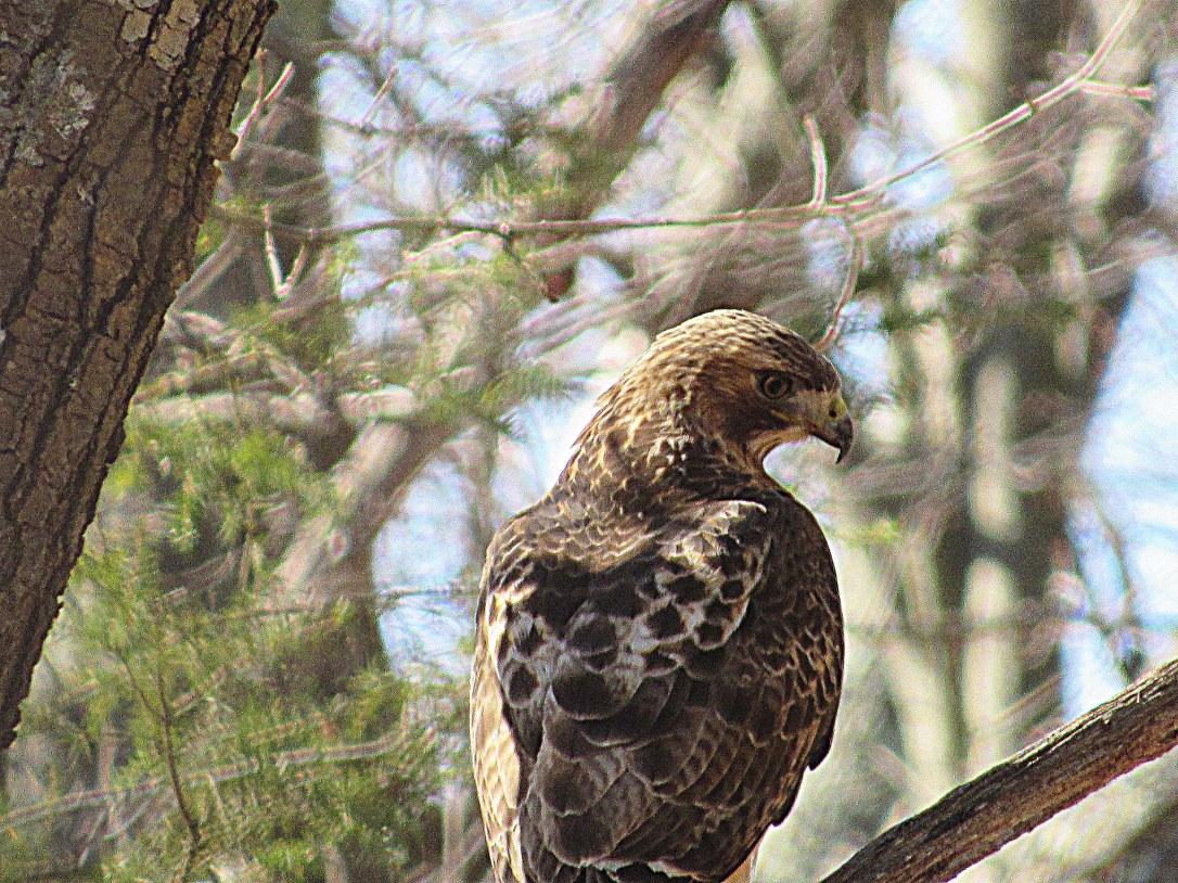 IMG_2351 Topsfield Audubon Ipswich River