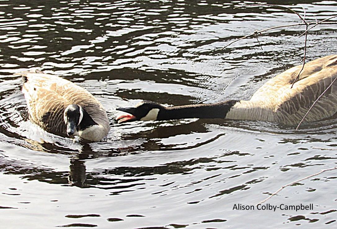 IMG_2409 Topsfield Audubon Ipswich River