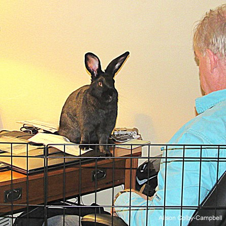 img_1773-haverhill-buca-bunny-rabbit-and-jon