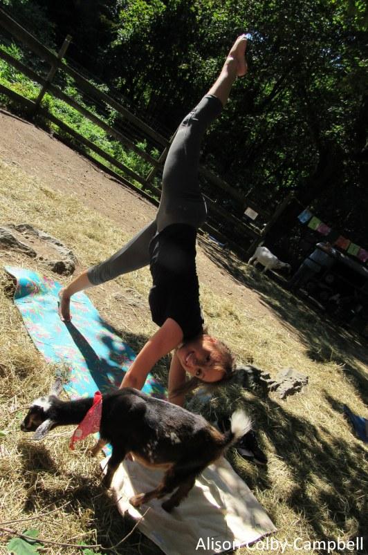 IMG_8140 Boxford Merril Goat Yoga with Logan and Sloan