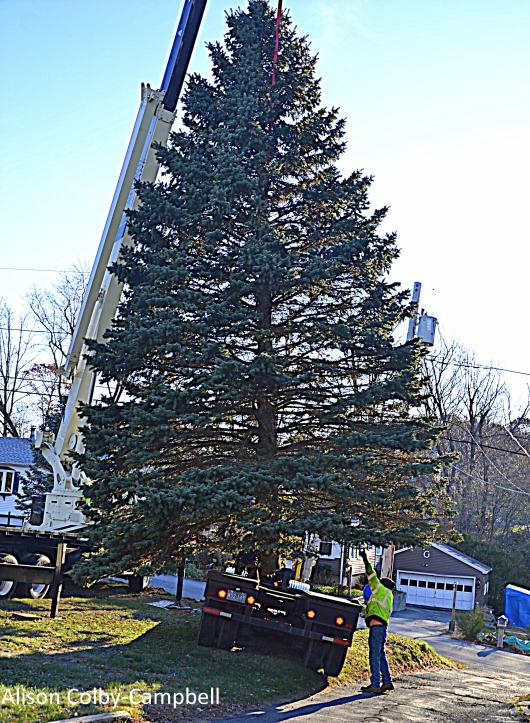 DSC_0108 Haverhill Christmas Tree 2017
