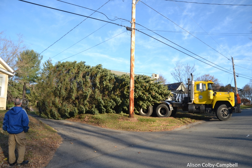 DSC_0189 Haverhill Christmas Tree 2017 Ken Quimby Watches tree moved from his property