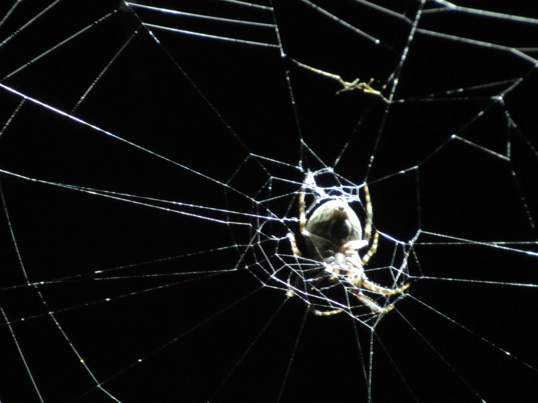 IMG_2283 HAV by Alison Colby-Campbell SPooky stuff Spiders frogs toads full moon