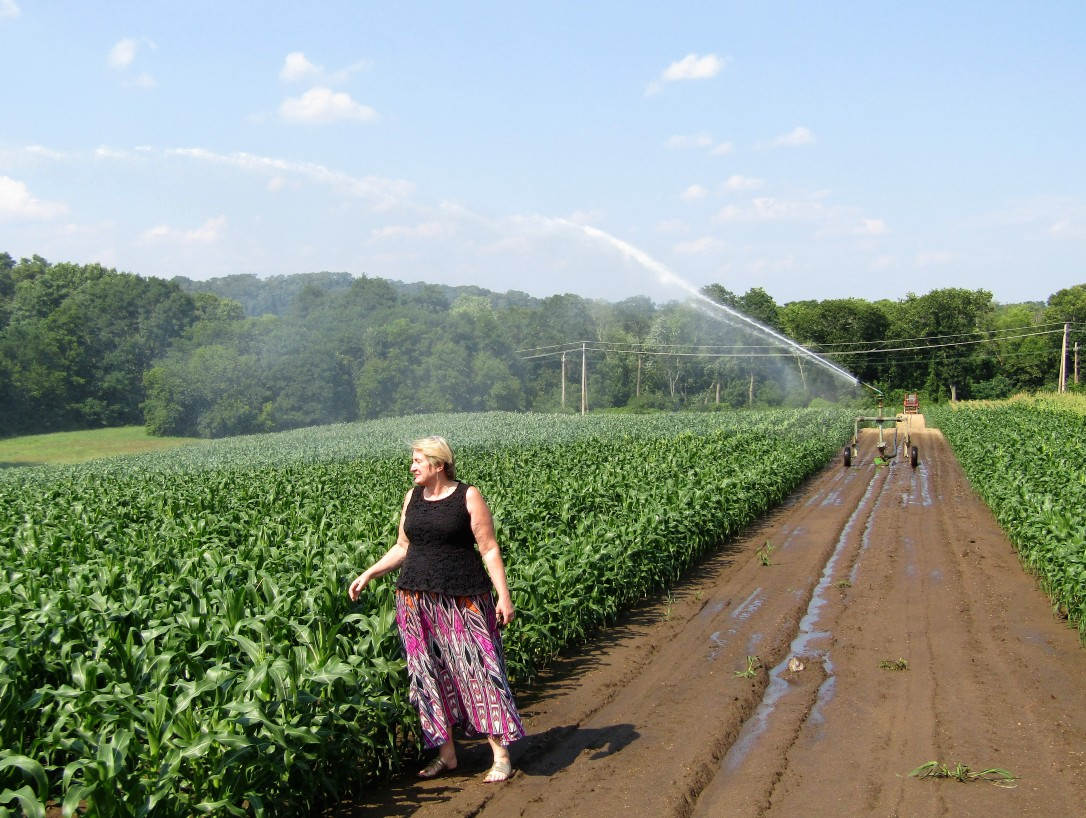 IMG_1764 HAV (c) Alison Colby-Campbell Chrs Farm Stand watering corn august - Copy