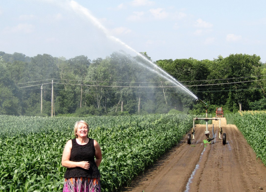 IMG_1771 HAV (c) Alison Colby-Campbell Chrs Farm Stand watering corn august - Copy