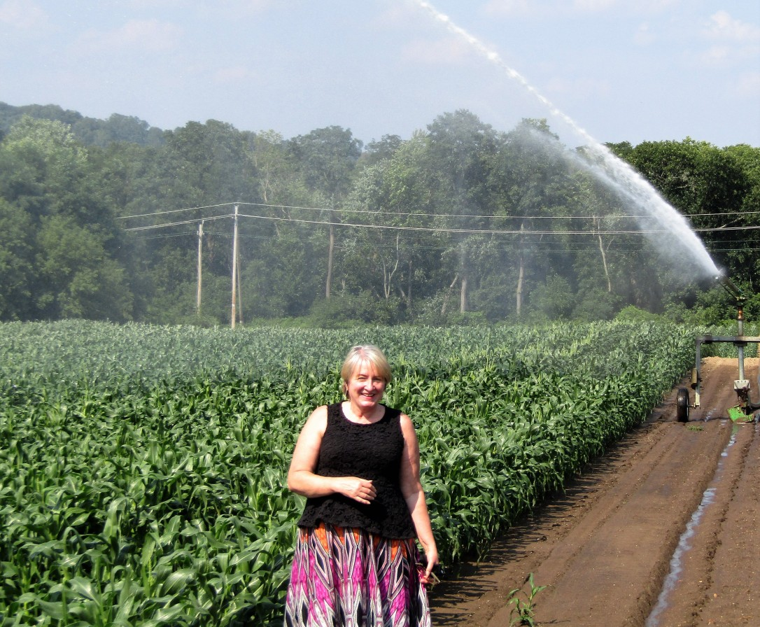 IMG_1772 HAV (c) Alison Colby-Campbell Chrs Farm Stand watering corn august