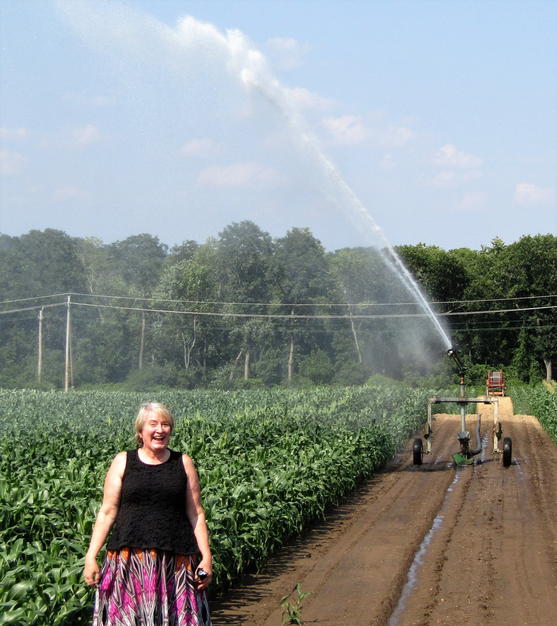IMG_1773 HAV (c) Alison Colby-Campbell Chrs Farm Stand watering corn august