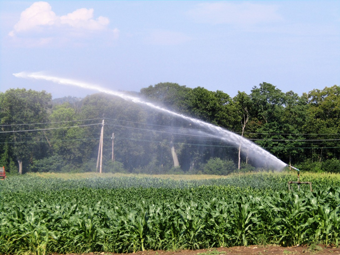 IMG_1788 HAV (c) Alison Colby-Campbell Chrs Farm Stand watering corn august